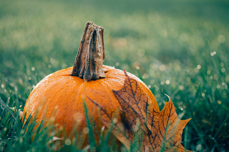 It's time to plan for fall!